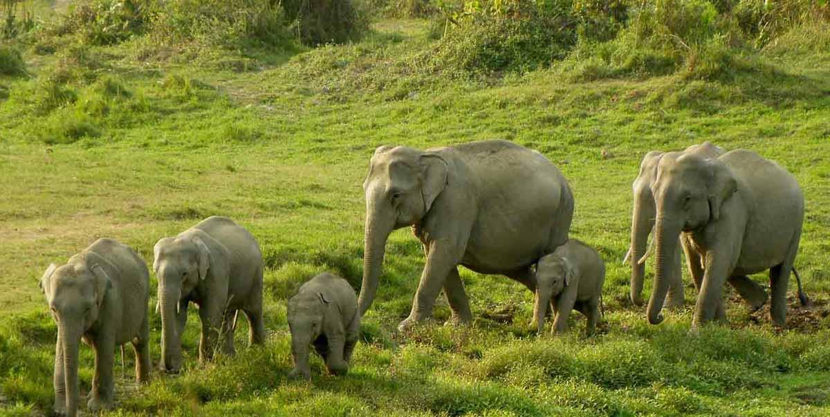 Dudhwa National Park Tour