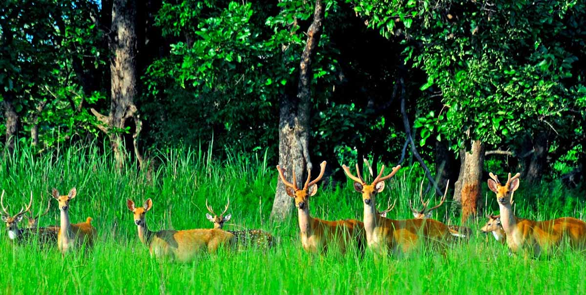 india nepal jungle lodges wildlife tour
