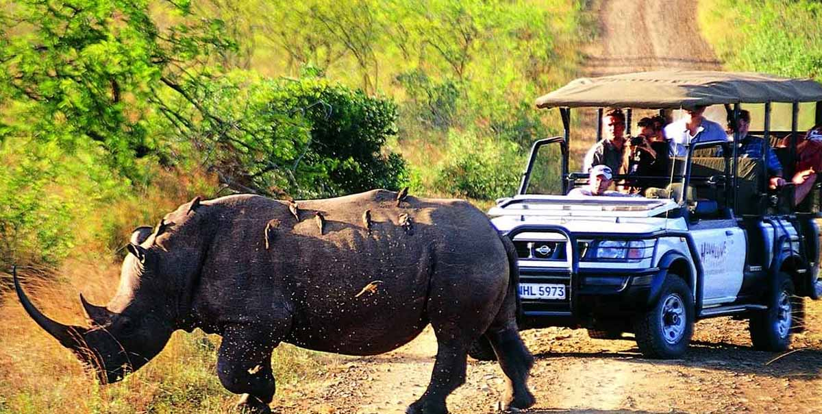 Kaziranga National Parks Tour