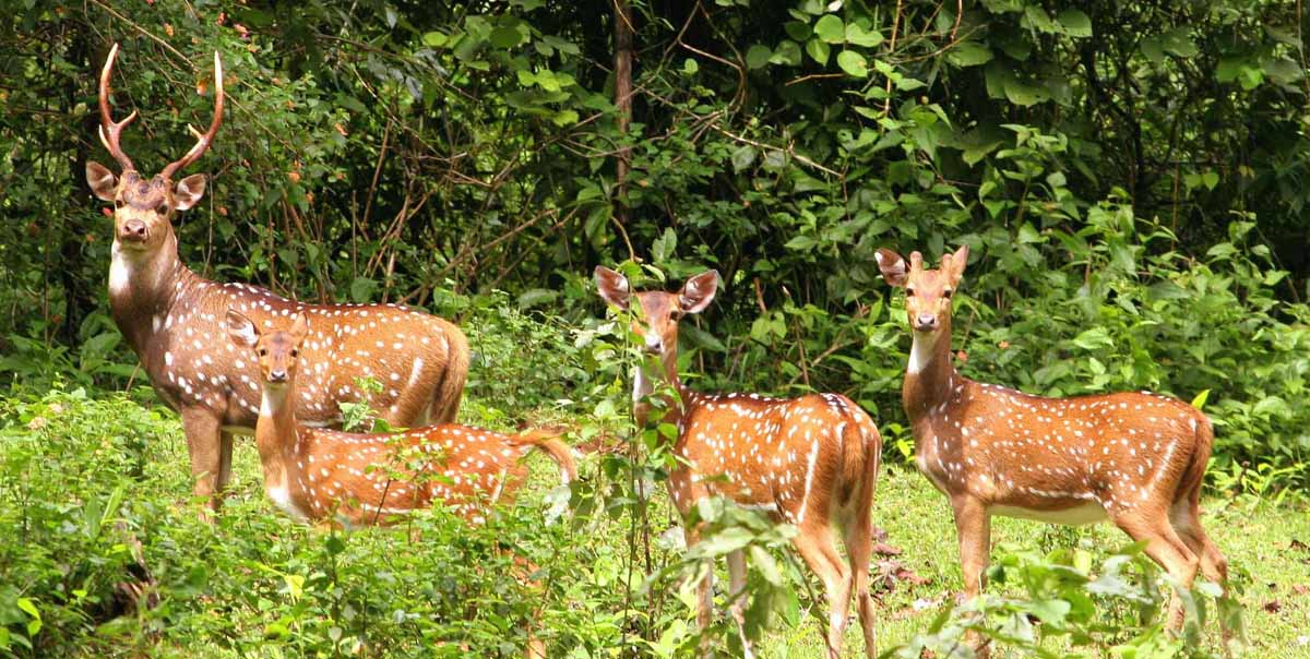 assam national parks tour