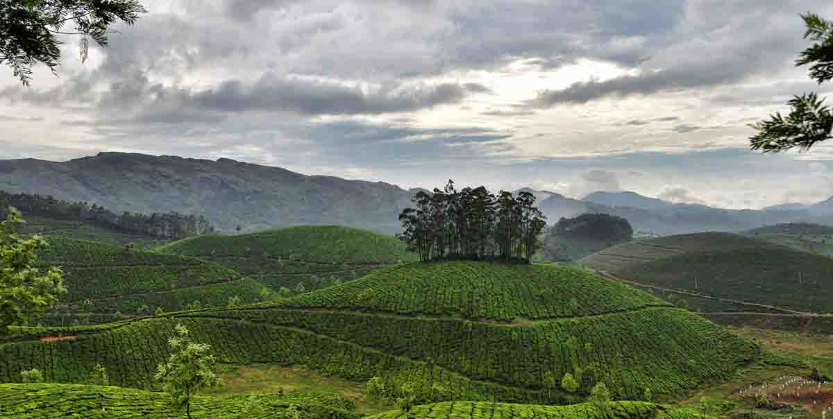 Munnar Hill Station Tour