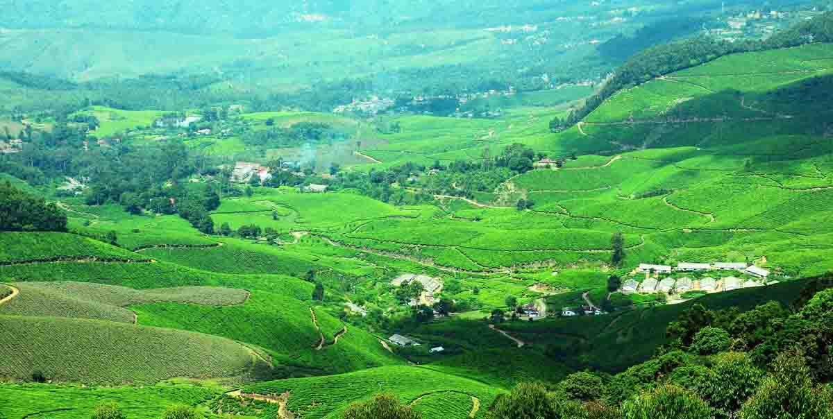 Munnar Honeymoon Tour Packages