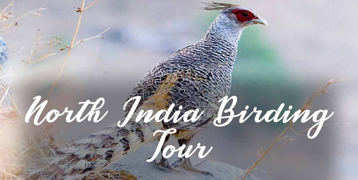 North India Birding Tour