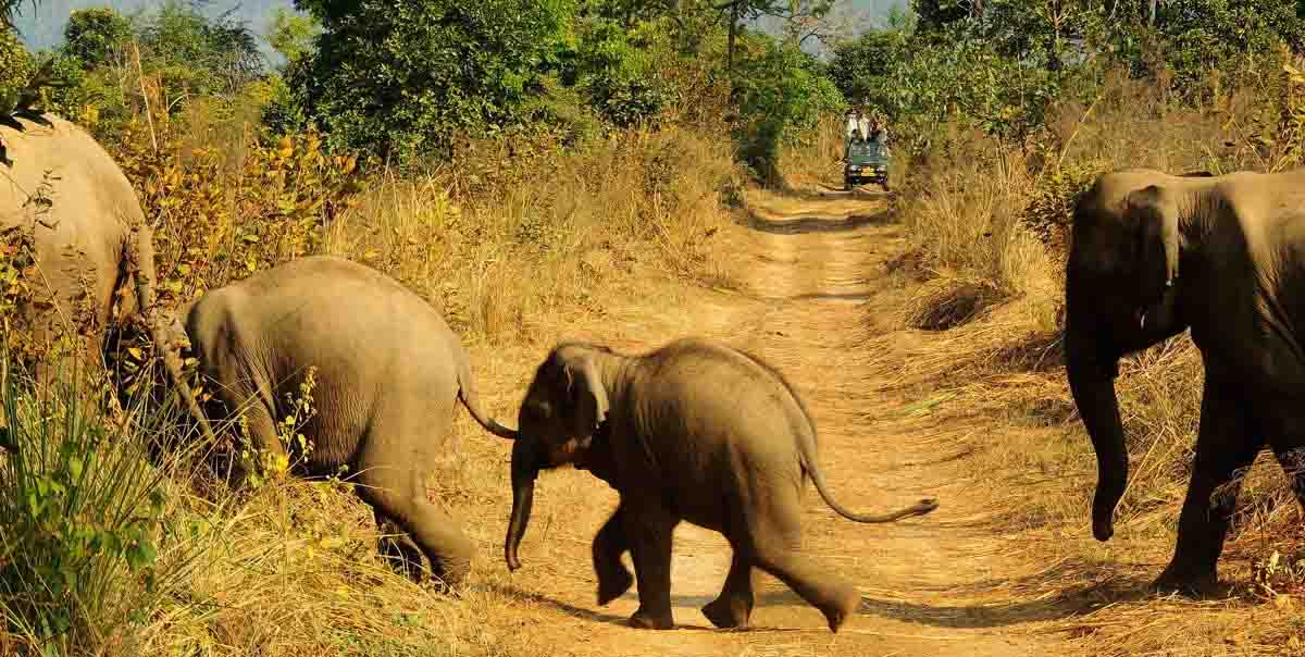 North & Central India Tiger Tour Package