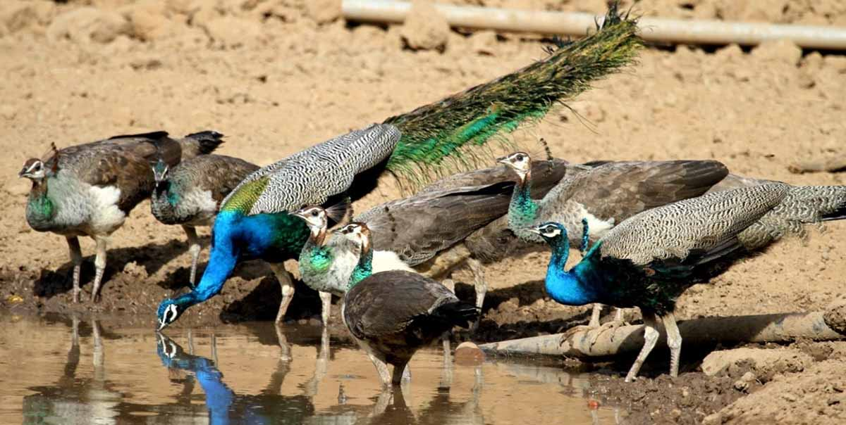 Bharatpur Bird Sanctuary Tour Package